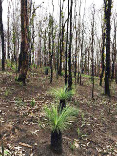 Regrowth after fires